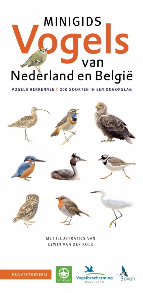 Verwonderlijk Minigids Vogel van Nederland en België RF-26